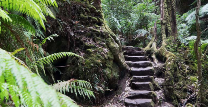 Views in the Blue Mountains that are worth the day trip
